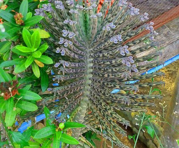 Thailand Plant