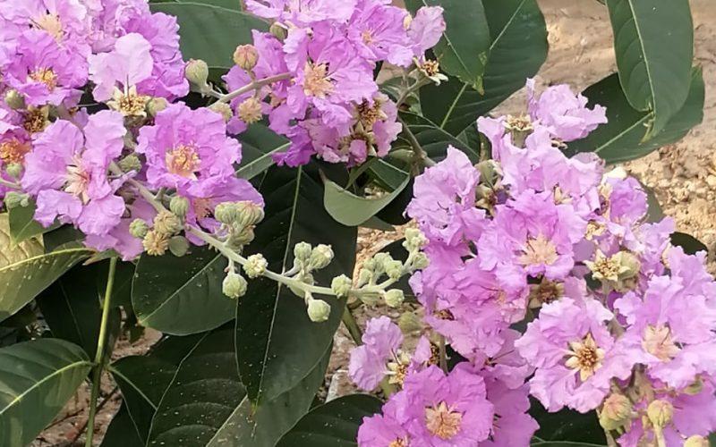 Purple flowers free tree