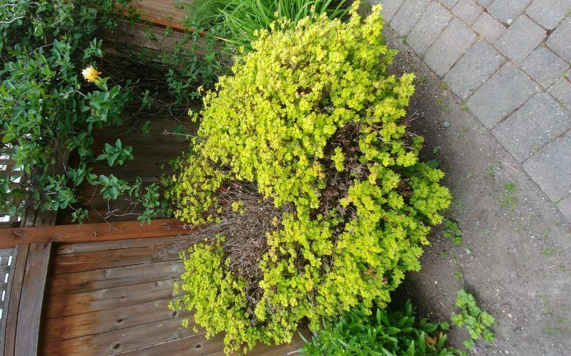 Kawell plant