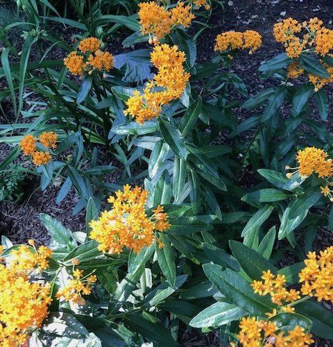 Green leaves, orange flowers