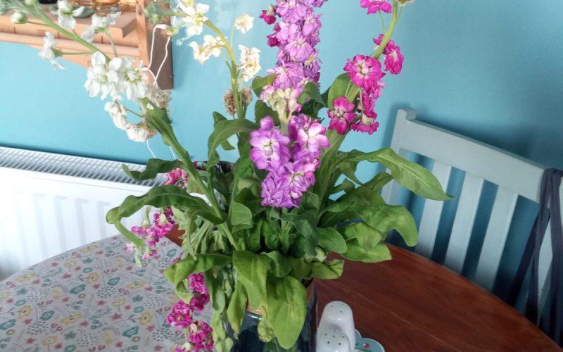 Unknown flowers from garden