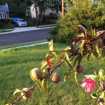 Anastazia Flower