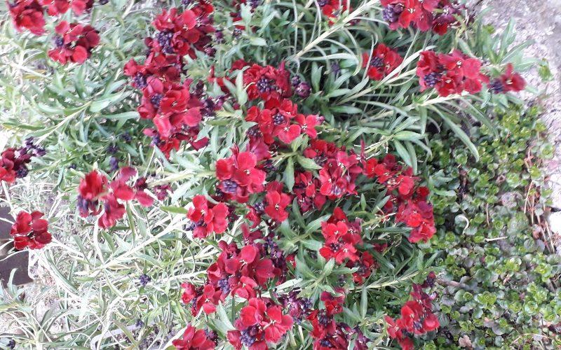 Grren plant red flowers