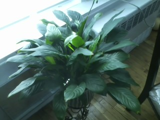 Green Leaves White Flowers