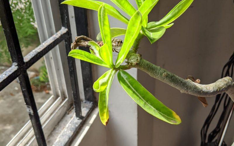 Plant name needed
