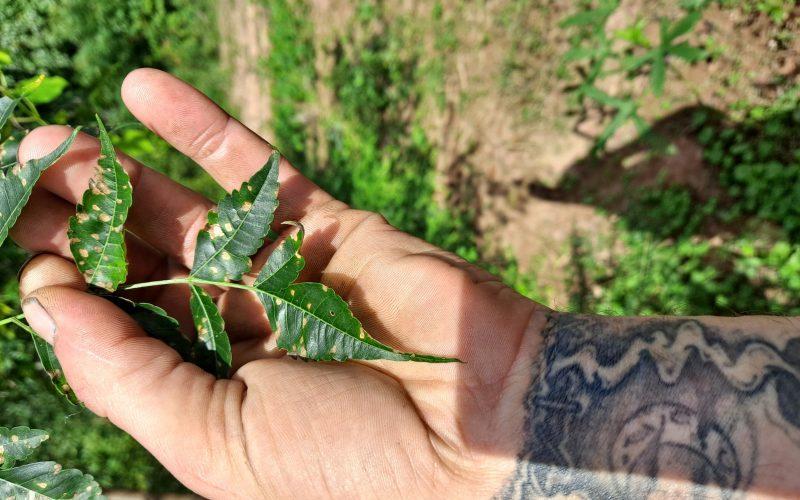 Brown tree green leaves