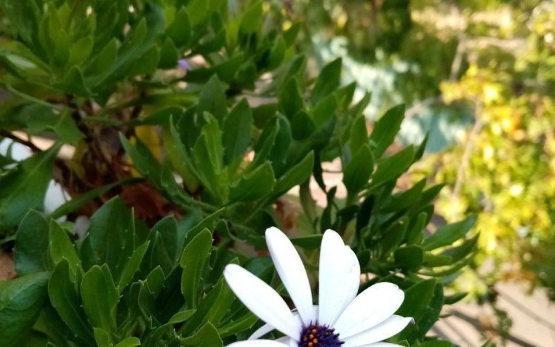 Green plant white purple flowers
