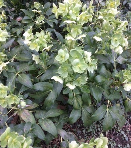 Low plant with green leaves
