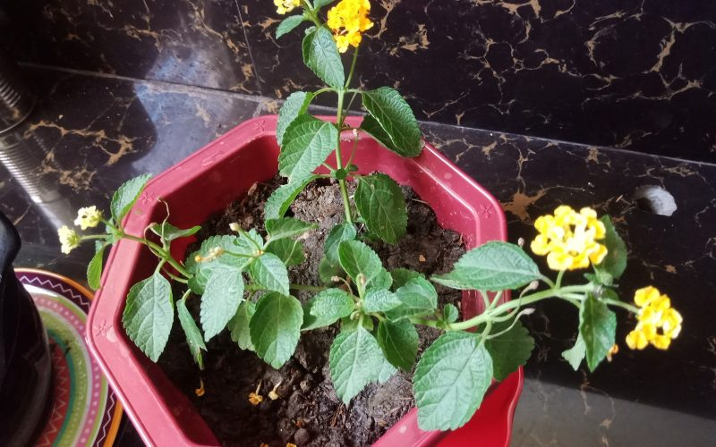 Green leaves with yellow flower