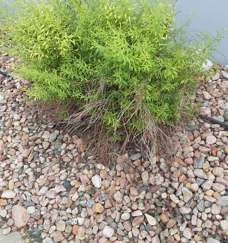 Green leaf shrub