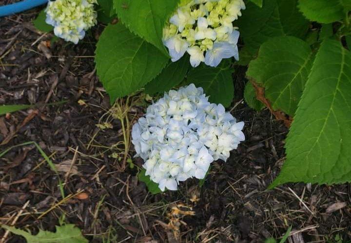 Name of flower
